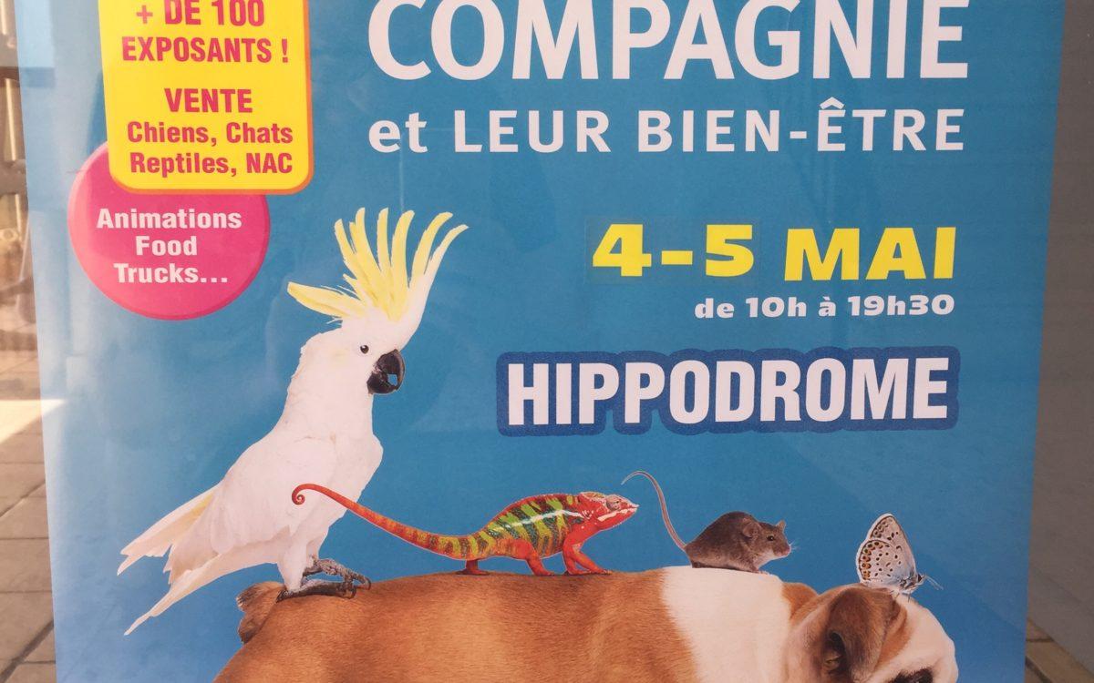 Affiche du salon des animaux avec un chien et un perroquet sur le dos